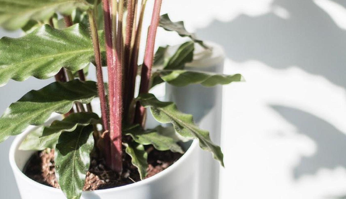 planta jardín vertical Citysens