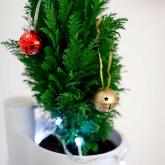 Avet de Nadal