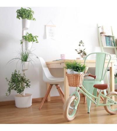 Torretes amb plantes aromàtiques
