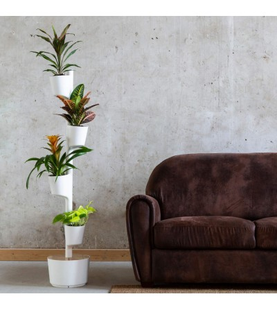 Jardin d'intérieur de plantes Jaune Vif