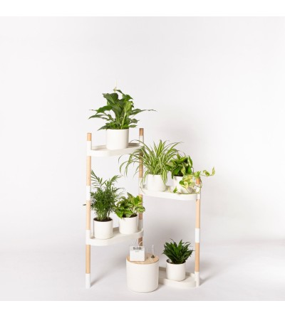 Plant shelves with plants km 0