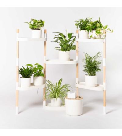 copy of Étagère pour plantes à 6 plateaux