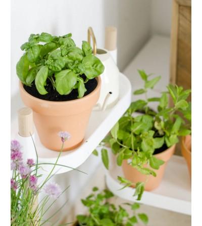 Kit mit 6 Kräutern und Handbuch @Planteaenverde