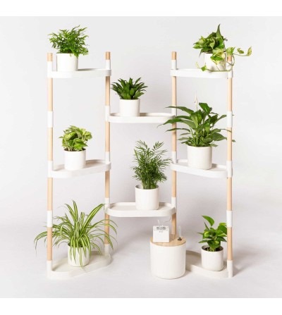 Regal mit luftreinigenden Pflanzen