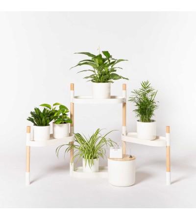 Étagère avec plantes purificatrices d'air