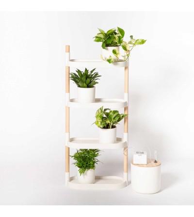 Estantería con plantas purificadoras del aire