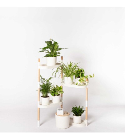 Shelving with air purifying plants