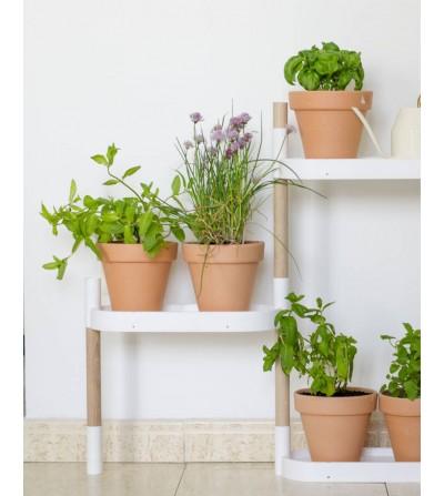 Estantería con plantas aromáticas y manual de @Planteaenverde