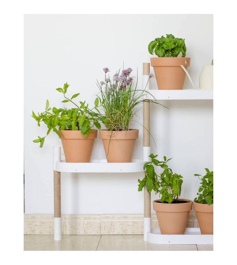 Shelves with herbs