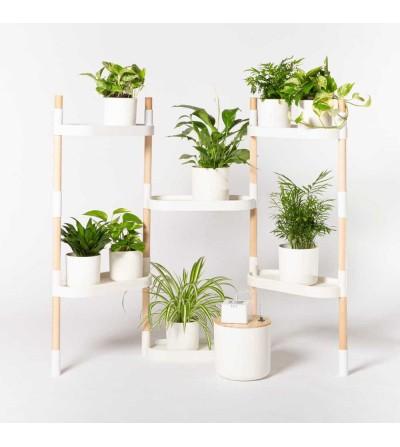 Self-watering plant shelves