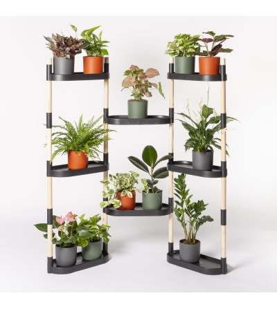 Shelving with colorful plants km 0