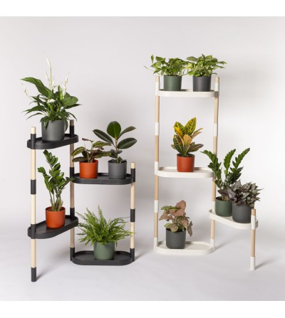 Shelving with colorful plants