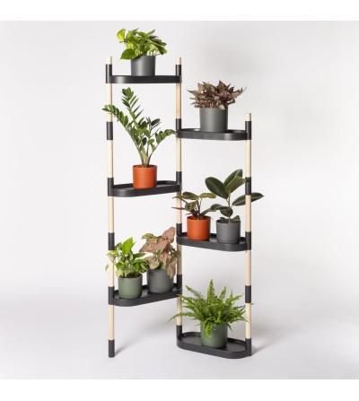 Regal mit farbenfrohen Pflanzen