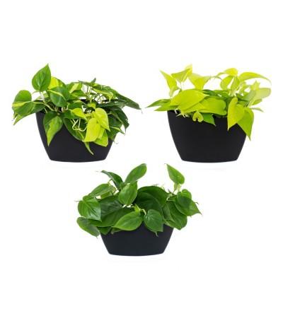 Lot de 3 pots muraux avec plantes suspendues