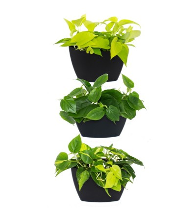 wall planter with Pothos