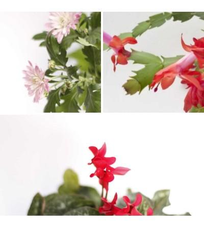 Herbst Pflanzen Set