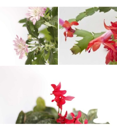 Pack de plantes automne