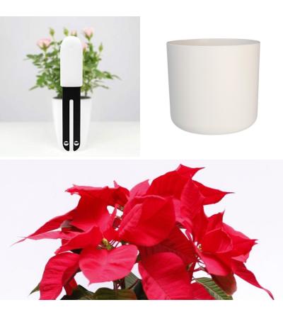 Perfektes Weihnachts-Set mit Weihnachtsstern