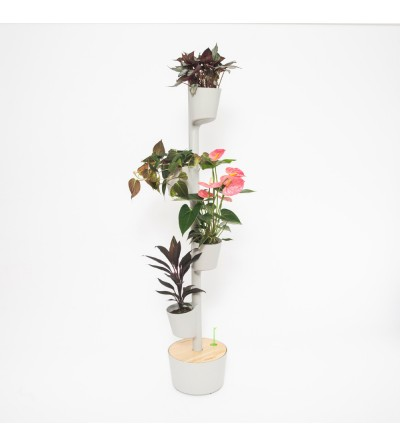 Self-watering vertical planter with Pink Passion plants