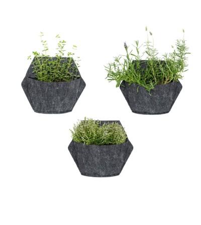 Lot de 3 pots muraux avec plantes aromatiques