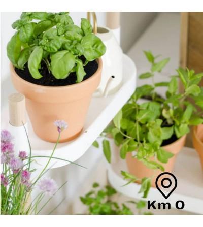 Kit de 6 plantas aromáticas con manual de @Planteaenverde