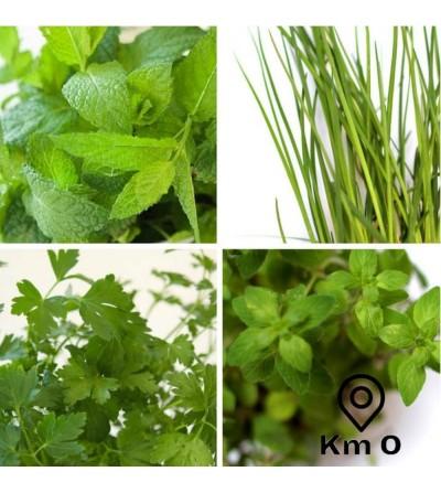Packung mit 4 aromatischen Pflanzen