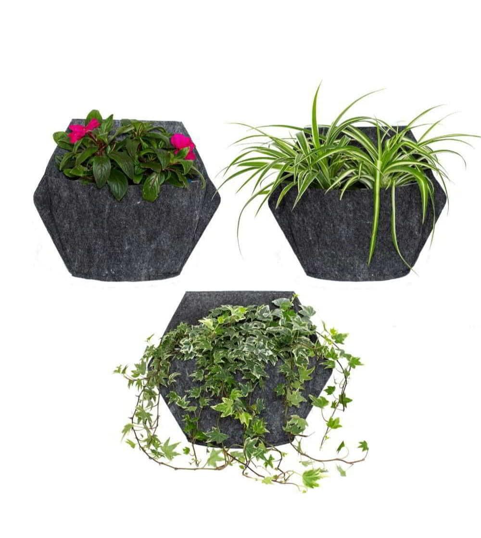 macetas de pared con plantas de exterior