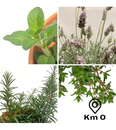 Lot de 4 plantes provençales