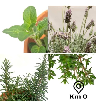 Pack 4 aromatic plants of the French Provence