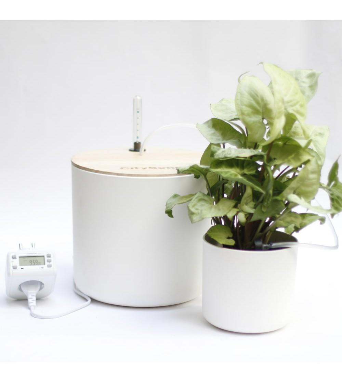 automatische Tropfbewässerung