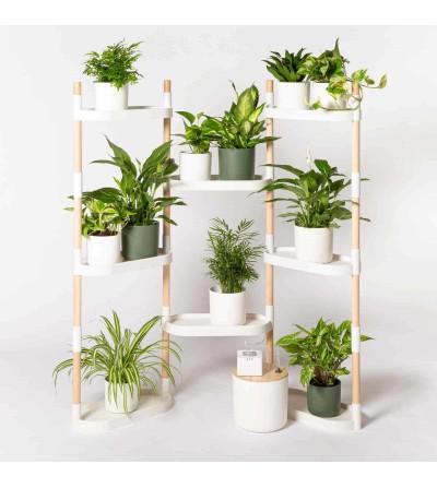 Estantería con plantas temporada