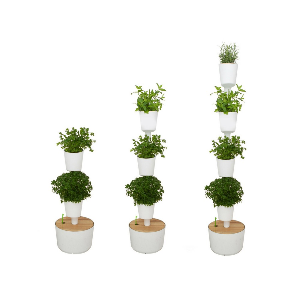 Plantas aromaticas de exterior perfect salvia cultivo for Plantas aromaticas exterior todo el ano