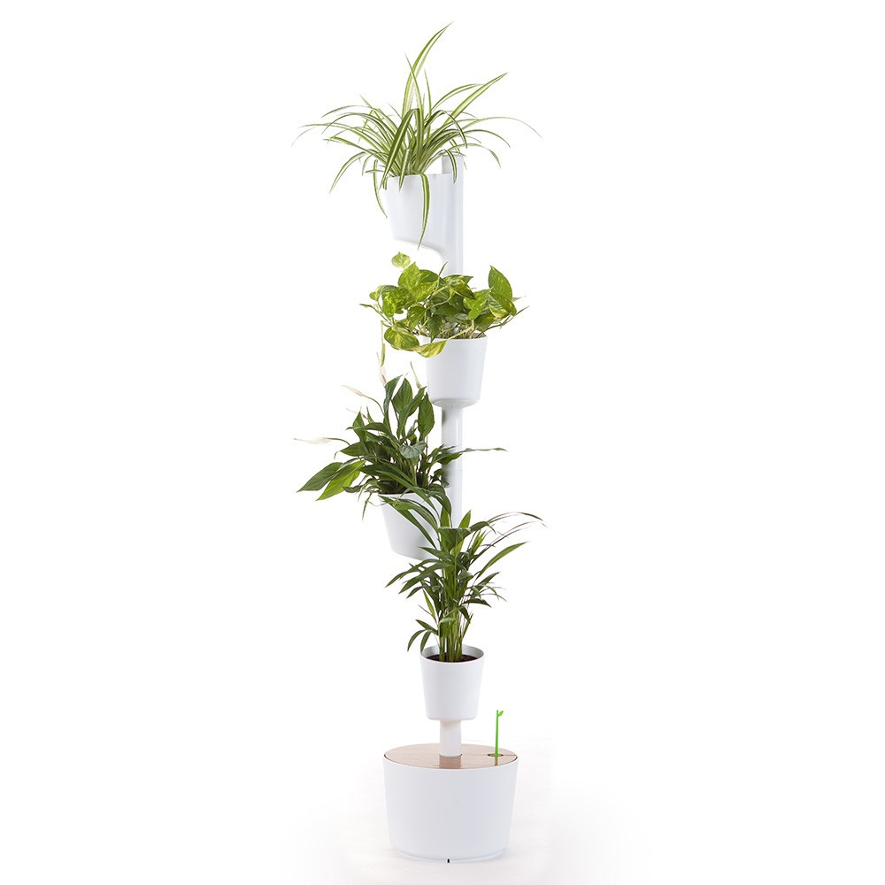 Vertical garden with air purifying indoor plants