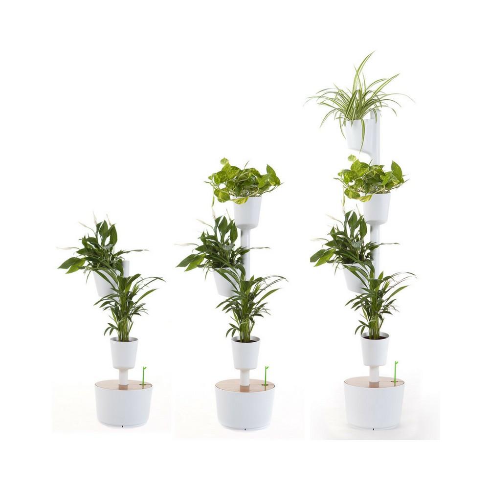 Plantas De Aire Finest Tres Plantas Que Purifican El Aire With  ~ Plantas Que Limpian El Ambiente