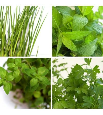 Pack de 4 plantes aromatiques
