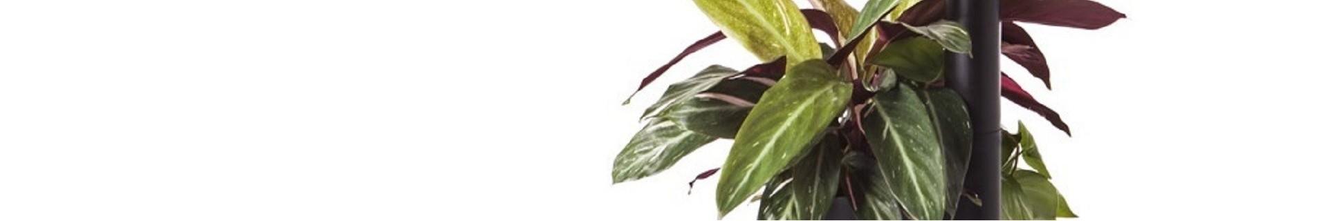 Catalogo: mobili per piante con irrigazione automatica