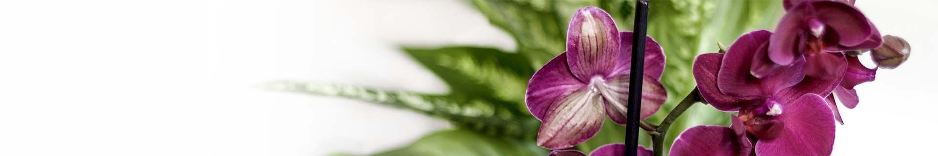 Pflanzen für CitySens vertikalen indoor Garten