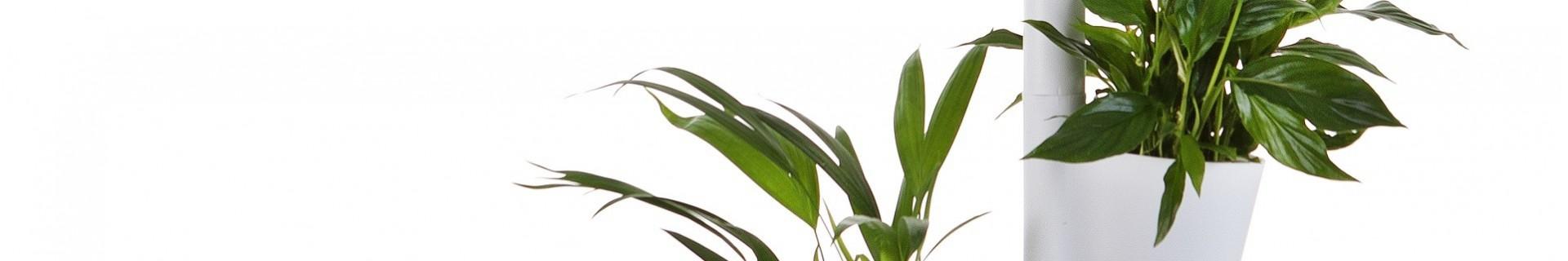 Pots avec arrosage automatique. Plus de plantes à la maison ou au travail.