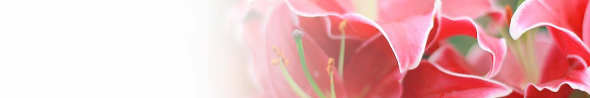 Citysens self-watering vertical planters and plant shelves special editions