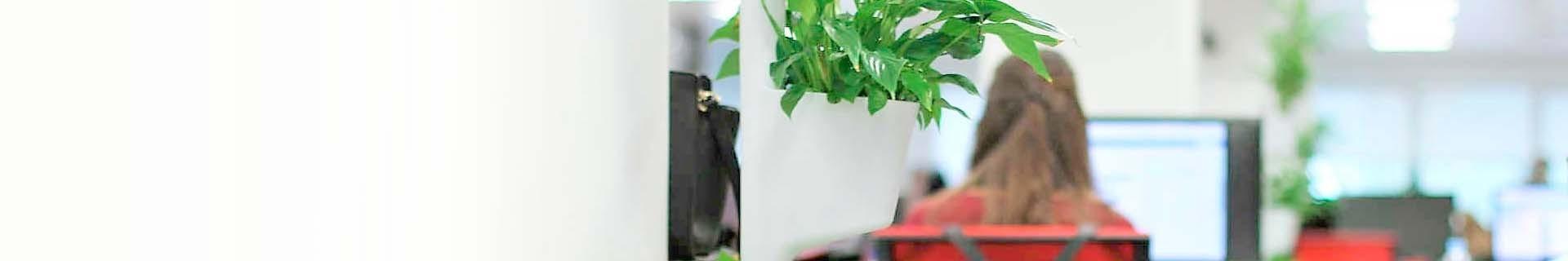 Plantas para oficinas | Expertos en plantas y productos con impacto social y medioambiental | Citysens