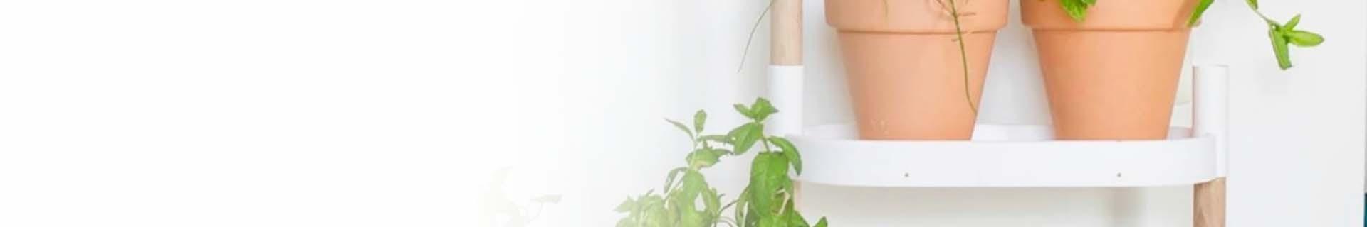 Etagere pour plantes avec plantes d'intérieur décoratives
