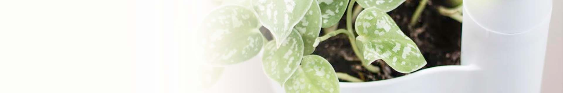 100% recycelte Produkte | CitySens