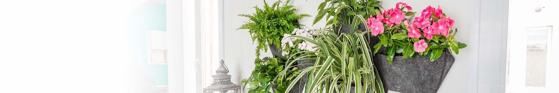 Wandpflanzgefäß für Zimmer- oder Außenpflanzen | CitySens
