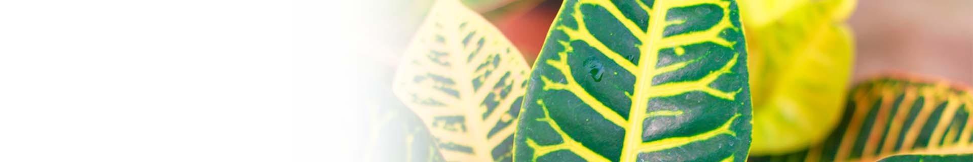 Auswahl an Herbstpflanzen und dekorativen Töpfen für zu Hause.