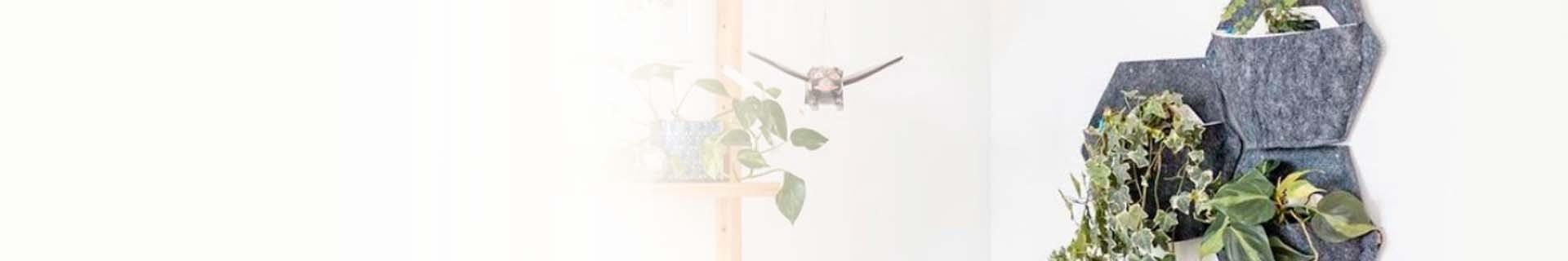 Testos de paret amb plantes penjants
