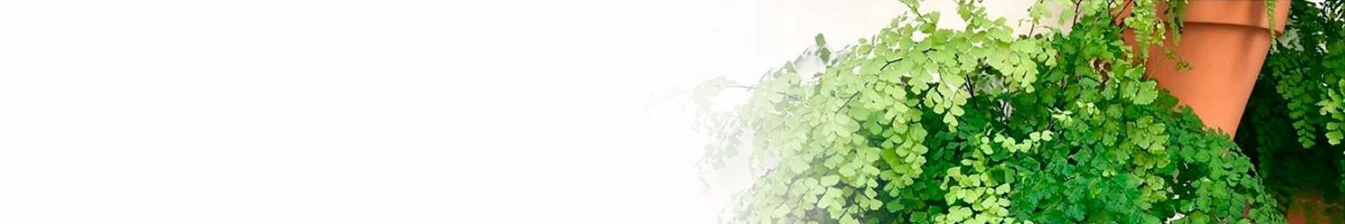 Subscription of new plants every season | CitySens