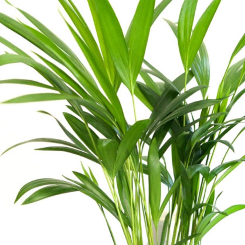cuidado de plantas