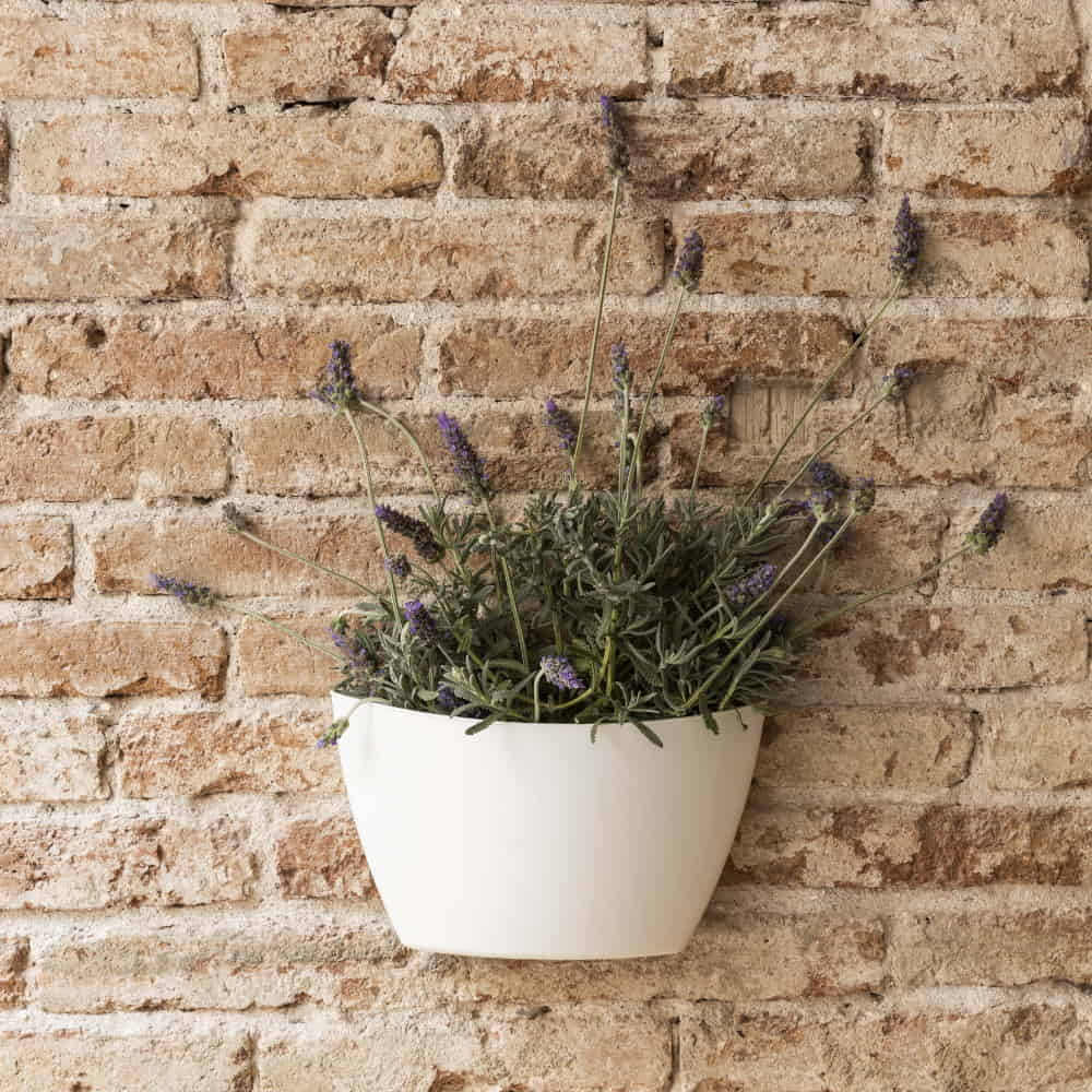 maceta de pared con semillas de lavanda