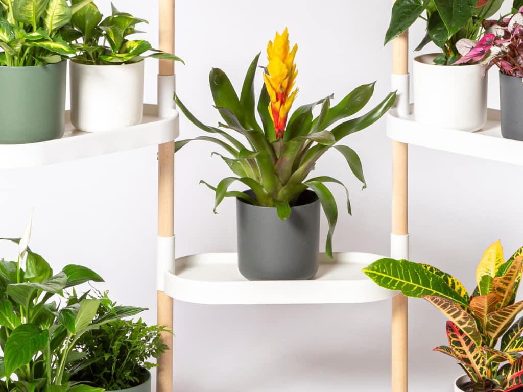plant sensor with smartphone app
