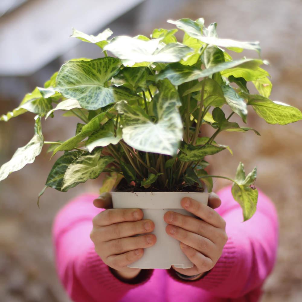 Plantas saludables